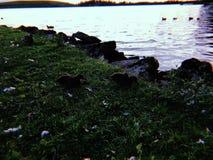 Rotsen overzees gras royalty-vrije stock foto's