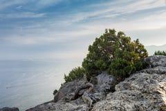 Rotsen, overzees, hemel, wolken, jeneverbes Bush op de klip stock afbeeldingen