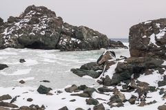 Rotsen van de berg in de baai Landschap van de kust van het Verre Oosten van Rusland het zeewater in de lente in de baai Royalty-vrije Stock Afbeelding