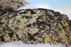 Rotsoppervlakte met korstmos en mostextuur Achtergrondtextuur in aard stock foto