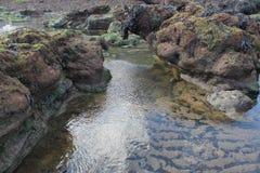 Rotspools met zeewier op strand Royalty-vrije Stock Fotografie