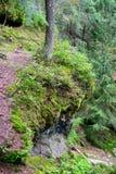 Rotssleep in het bos royalty-vrije stock afbeeldingen