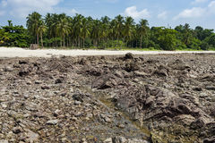 Rotsstrand met palmen Stock Afbeelding