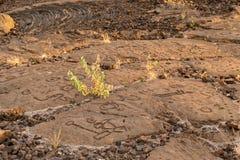 Rotstekeningen in vulkanische rots op de Sleep van de Koning, Kona, Hawaï worden gesneden dat stock afbeelding