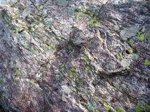 Rotstextuur detauil met een mos Stock Fotografie
