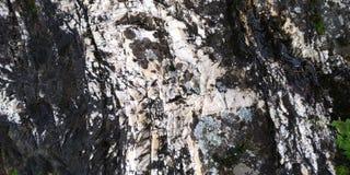 Rotstextuur met paddestoelen en Bladeren royalty-vrije stock foto