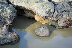 Rotsvorming op Shaws-Inhamstrand bij logetijde in Laguna Beach, Californië royalty-vrije stock fotografie