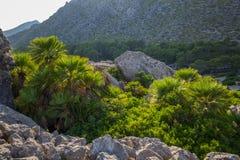 Rotsvormingen en Mediterrane flora dichtbij Pollenca in het eiland van Mallorca, Spanje stock afbeeldingen