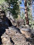 Rotsvormingen, Hogere Bristlecone-Lijnsleep, MT Charleston, Nevada stock afbeeldingen