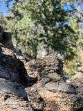 Rotsvormingen, Hogere Bristlecone-Lijnsleep, MT Charleston, Nevada royalty-vrije stock foto