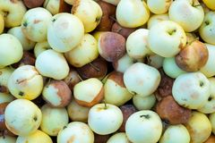 Rotte appelen Royalty-vrije Stock Afbeelding