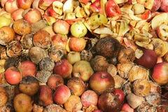 Rotte appelen in de tuin royalty-vrije stock foto