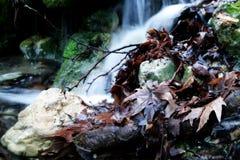 Rotte Bladeren Royalty-vrije Stock Foto
