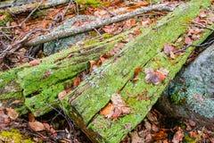 Rotte houten overblijfselen royalty-vrije stock foto