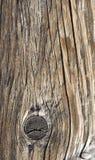 Rotte houttextuur Stock Afbeeldingen