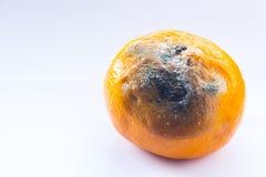 Rotte mandarin op een witte achtergrond Citrusvrucht met vorm wordt behandeld die Een bedorven fruit De ruimte van het exemplaar  royalty-vrije stock foto's