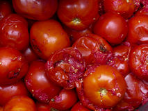 Rotte tomaten Stock Afbeelding
