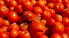 Rotte tomaten onder goed, close-up stock footage