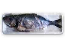 Rotte vissen Royalty-vrije Stock Afbeelding
