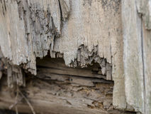 Rotted boards. Old rotted wooden boards of houese wall Stock Image