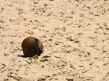 Rotted coconut in the sun. Royalty Free Stock Photo