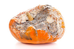 Rotted pumpkin. Closeup picture of a rotten pumpkin.  on white background Stock Photography