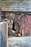Rotted wall. A piece of rotted wall to a barn Royalty Free Stock Photo