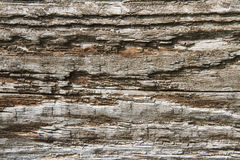 Rotted wood Royalty Free Stock Photography