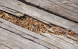Rotted wood on boardwalk path Stock Photo