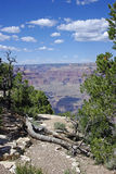 Rotted Wood at the Edge of the Grand Canyon Royalty Free Stock Photography