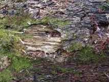 Rotted wooden log Stock Image