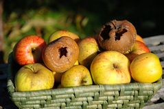 Rotten apple. A wicker basket of apples with two rotten apples on top Royalty Free Stock Images