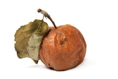 Rotten apple. Isolated on white background Stock Image