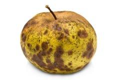 Rotten apple Royalty Free Stock Photos