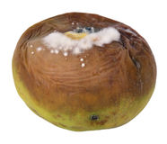 Rotten apple Royalty Free Stock Photography