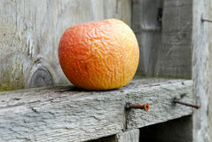 Rotten apple. On wooden ledge royalty free stock images