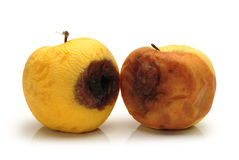 Rotten apple. On a white background Stock Images
