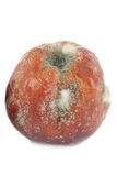 Rotten apple. Isolated on white background Royalty Free Stock Image