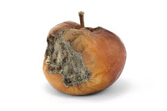 Rotten apple. A rotten apple on a white background Royalty Free Stock Images