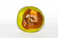 Rotten apple. A rotten apple, with brown spots and white mold Stock Image