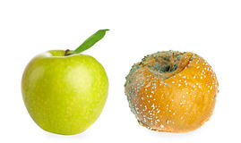 Rotten apple and fresh green apple Royalty Free Stock Image