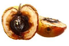 Rotten apple halves isolated. Food waste. Royalty Free Stock Photo