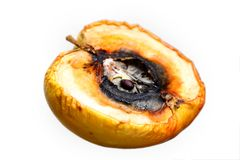 Rotten apple halves isolated. Food waste. Royalty Free Stock Photos