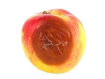 Rotten apple Royalty Free Stock Image