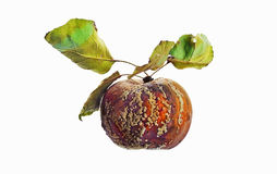 Rotten apple with leaves Royalty Free Stock Photos