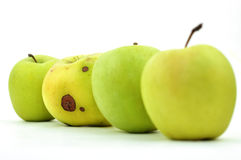 Rotten Apple between Perfect Ones Royalty Free Stock Image