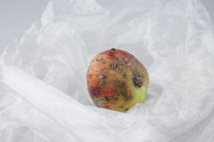 Rotten apple. On a plastic bag Royalty Free Stock Photos