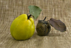 Rotten apple and quince Royalty Free Stock Photos