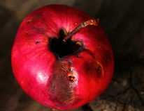 Rotten apple. Rotten red apple on wooden surface, close-up Royalty Free Stock Photo