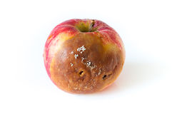 Rotten apple. Single rotten apple on white background Royalty Free Stock Images